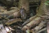 Cassowary Feet